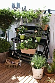 Potted flowering plants on folding plant rack on roof terrace