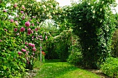 Romantic rose arch in garden