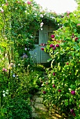 Shed hidden amongst flowering plants in established garden