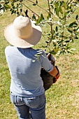 Woman carrying potted plant into garden