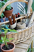 Plant pots and basket of gardening tools on wooden table