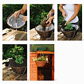 Gardening - planting flowering plants in hanging baskets