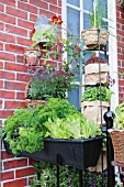 Window box and herb pots against brick wall