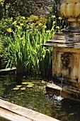 Yellow flag (Iris pseudacorus) and water lilies in pond with water spout