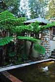 Garden pond next to tree fern