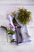Still life - secateurs, flower and a handful of moss on a plaid cloth