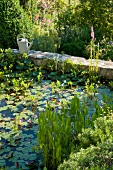 Water lilies in pool with stone surround in Mediterranean garden