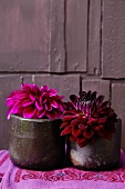 Short-stemmed dark red and crimson dahlias in stoneware beakers on embroidered linen cloth