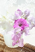 White and pink sweet peas in water glass