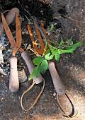 Rusty gardening tools on stone surface