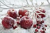 Frostige Äpfel, Ilexbeeren und Deko-Schneeflocken im Kunstschnee