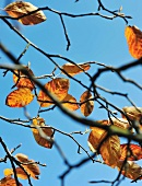 Blick durch Zweige mit einzelnen Blättern in den Himmel