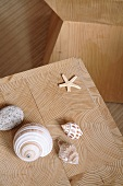 Shells and starfish on cross-grained surface of modern wooden stool