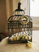 Roses in vintage metal cage on table