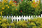 Blooming flowers at garden fence