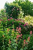 Verschiedenfarbige blühende Blumen und Rosenbüsche im Garten