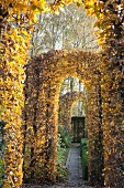 Pergola in garden - topiary beech hedges cut into arched doorways