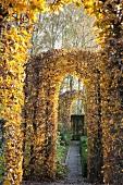 Pergola in garden - topiary beech hedges cut into arched doorways