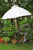 Sunshade and flowerpots in garden