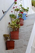 Flower pots standing on stairs
