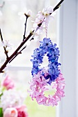 Small wreaths of hyacinth florets hanging from flowering twig
