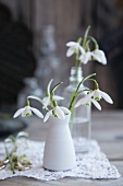 Snowdrops in a white porcelain vase on a lace cloth