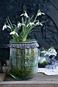 Snowdrops in a jar edged with blue gingham ribbon on a wooden surgace