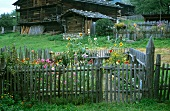 Cottage garden with picket fence in late summer