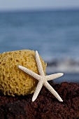 Starfish and sponge on seaside beach