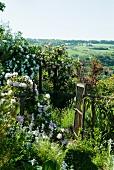 Blühende Rosenbüsche in wildem Garten und Blick über die Landschaft. Das Gartentor ist geöffnet.