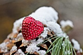 Christmas decoration on fir cone with a dusting of snow