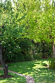 Fig tree and narrow path in sunny garden