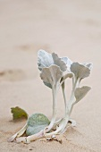 Plant growing in sand