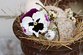 White and purple pansy and bird's eggs set in straw nest in amphora