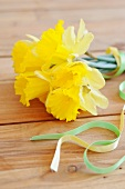Daffodils and decorative ribbon on wooden surface