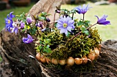 Flower arrangement with moss and bulbs