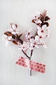 Kirschblüten auf weißem Grund