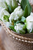 Bouquet of tulips in wicker bowl