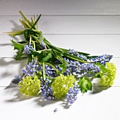 Spring bouquet of grape hyacinth and viburnum