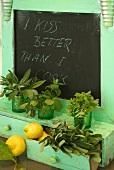 Fresh herbs and lemons on a wooden turquoise shelf and a built in chalkboard