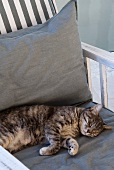 Cat lying on cushion of garden chair