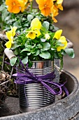 Tin can planted with spring flowers (violas)