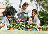 Family tending potted plants
