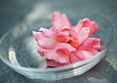 Flower head in clear dish