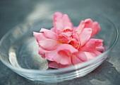 Flower head in clear dish
