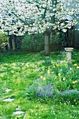 Spring yard with tree and flowers in blossom