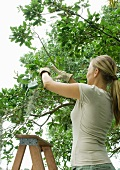 Woman pruning tree