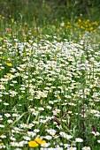 Wildflowers growing in field