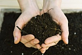 Handful of gardening soil