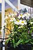 Wiesenblumen im Blumenkasten